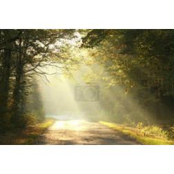 Misty autumn forest at dawn